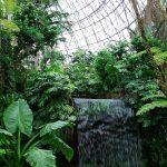 ジメジメした雨の日は東京の亜熱帯「夢の島 熱帯植物園」へGO!子連れにもオススメ